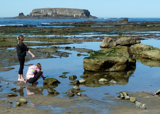 exploring the tidepools